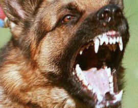 إغلاق محطّة نووية.. بسبب كلب
