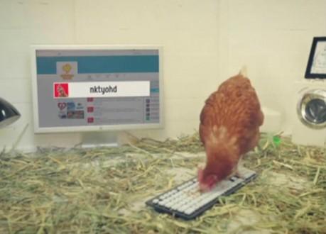 """بالفيديو.. دجاجة تغرد على تويتر قد تدخل موسوعة """"غينيس"""""""