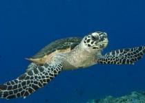glow-in-the-dark-turtle