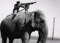 1-حيوانات-خدمت-في-الجيش