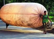1-طريقة-غريبة-لنقل-الغاز-الطبيعي-في-الصين