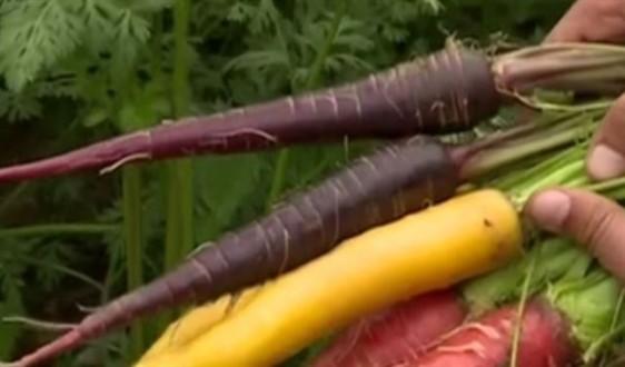 كويتي ينتج خضروات بألوان غريبة ومذاقات مختلفة