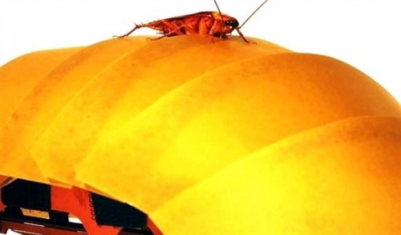 الصراصير مصدر إلهام !