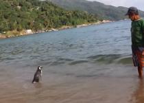 Penguin a