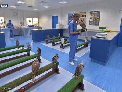 مستشفى أبوظبي.. للصقور