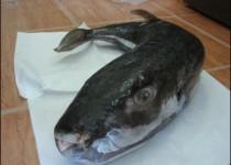 fish-487945d31fb0d
