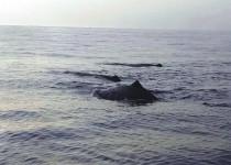 بعد رصد الحيتان في بحر صور.. إليكم الحقيقة والتفاصيل كاملة