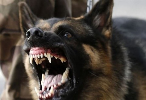 ac75109df كلب مسعور يهاجم مواطنًا في صيدا | Mulhak - ملحق أخبار لبنان والعالم ...