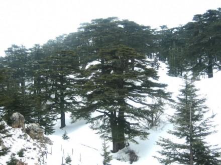 كيف سيكون طقس لبنان غداً؟