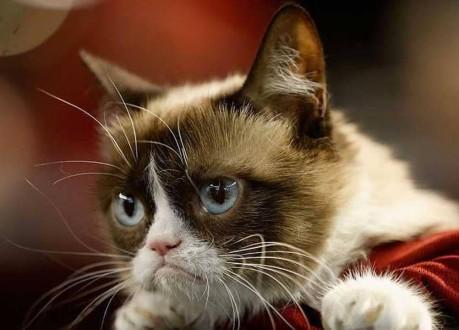 """وفاة أشهر """"قطة عابسة""""!"""
