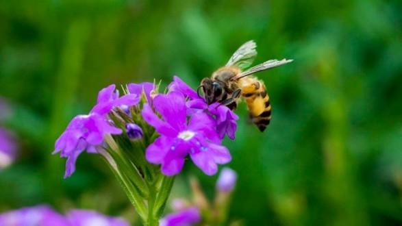شاب يقتل جاره بسبب نحلة !