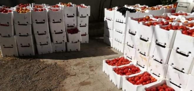 ضبط 9 اطنان من البندورة السورية المهربة في سوق الخضار في قب الياس