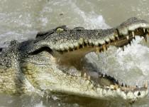 crocodile-marin-8af3d3-0@1x