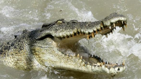 تمساح يسحب رجلا تحت الماء ويفترسه!