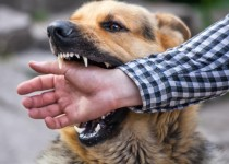 تفسير حلم رؤية عضة الكلب في المنام لابن سيرين