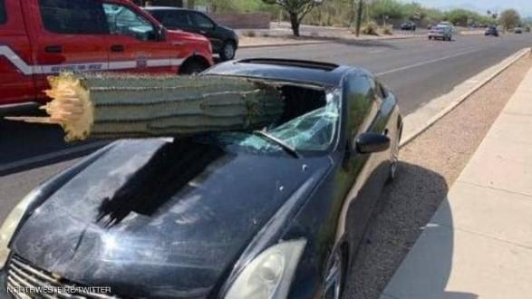 شجرة صبار كادت تقتل سائق سيارة.. والمعجزة تتحقق
