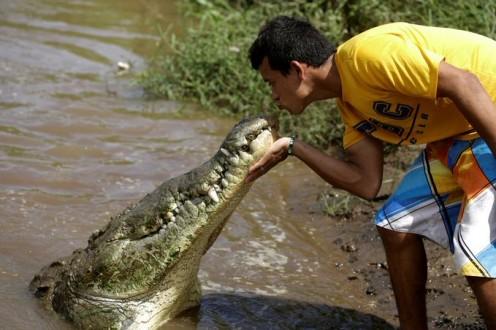 رجل يقبّل تمساحا !
