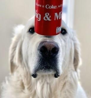 موهبة كلب في حفظ توازن الأشياء أعلى أنفه !