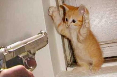 """""""هرّ"""" يهرب الهواتف المحمولة إلى المساجين !"""
