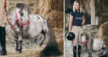 """بالفيديو ـ """"بومبيل"""" أقصر حصان في العالم بطول 56 سم !"""