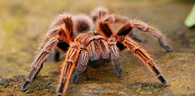 ضبطت 100 عنكبوت في حقائب مسافر بولندي!
