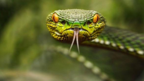 إكتشاف غريب ومفاجئ لدى ثعابين بحرية سامة!