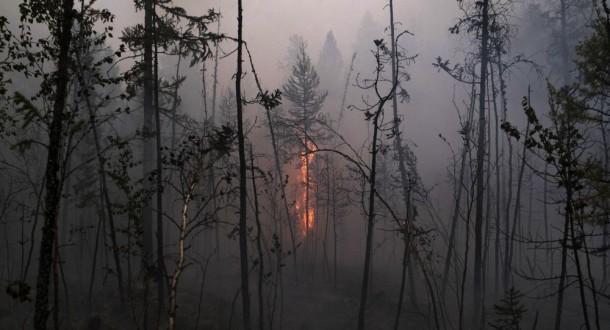 """ابتكار """"جل"""" يستطيع القضاء على حرائق الغابات"""