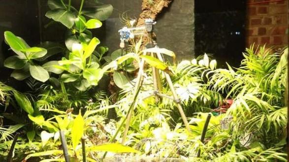 """""""بيتي"""".. أول نبتة في العالم تلتقط سيلفي لنفسها!"""