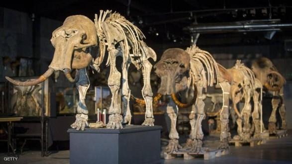 العثور على عظام حيوان عاش قبل أكثر من 150 قرنا !