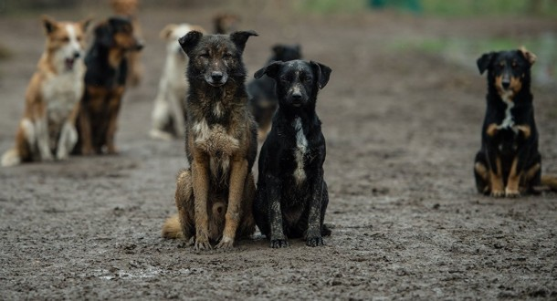 """استنساخ 6 كلاب تتمتع بخاصية """"الحس الأمني"""" في الصين…"""