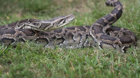 """حظر تجول عند بحيرة أميركية.. والسبب """"فالنتاين الثعابين"""" !"""