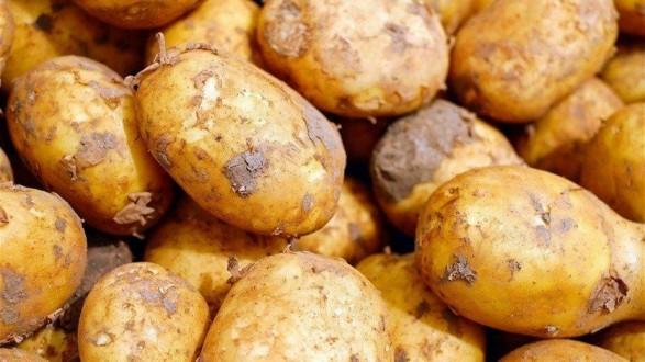 مزارعة فائزة باليانصيب توزّع البطاطا مجاناً… وسط وباء كورونا!